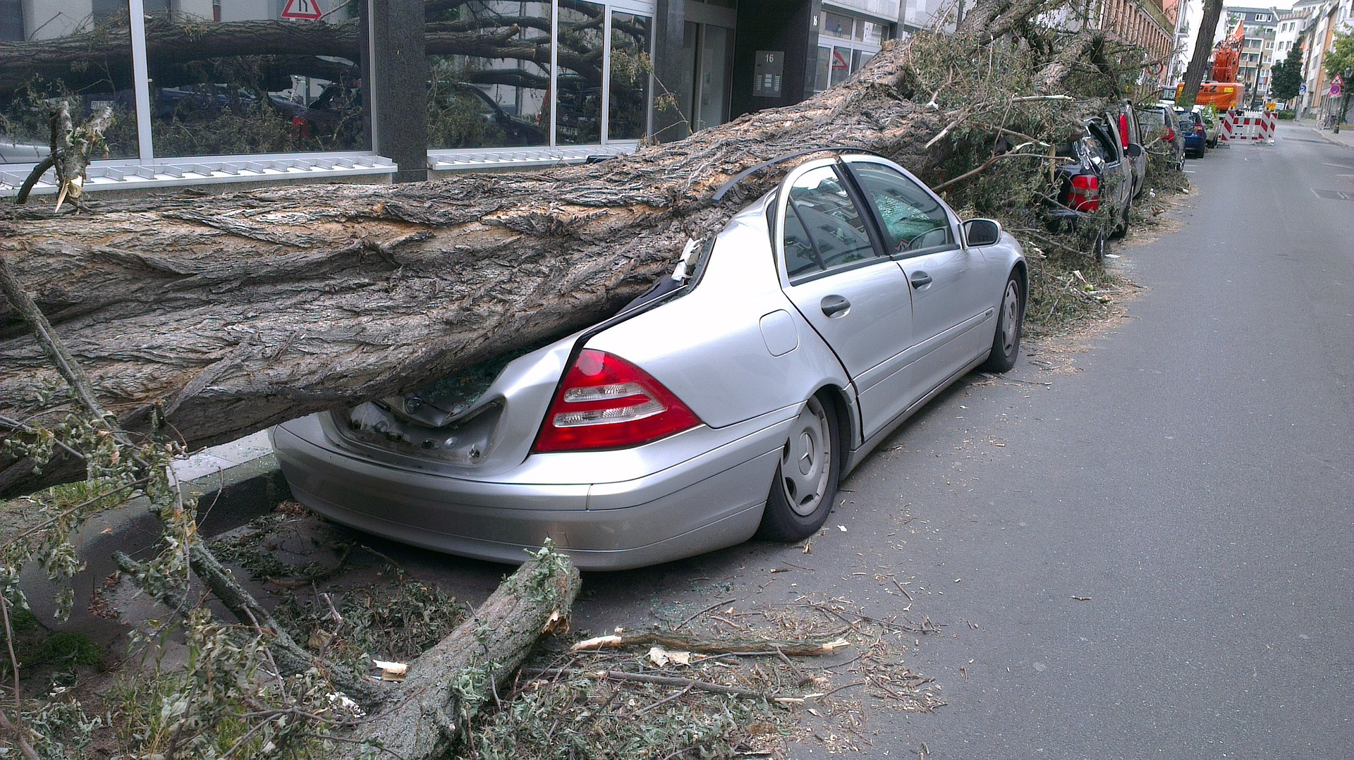 Tree crushing line of parked cars