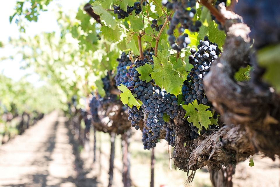 Wineries and vineyards insurance coverage